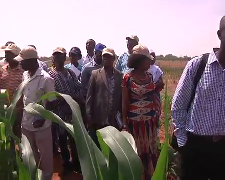 New-Maize-and-millet-Varieties-released-for-the-2015